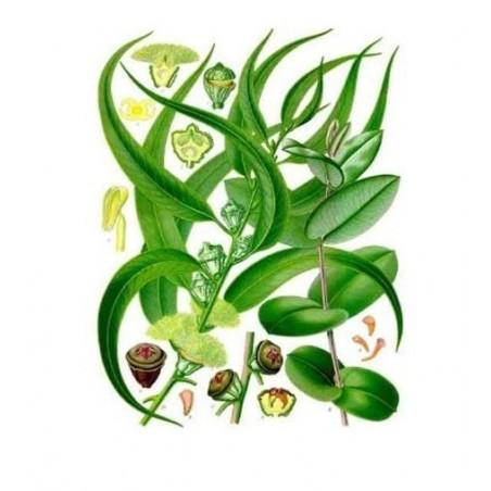 EUCALIPTO Air Freshener 250ml / spray